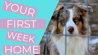 Bringing Home a Rescue Dog (6 Rescue Dog Tips for your First Week Home) //THE KIND CANINE