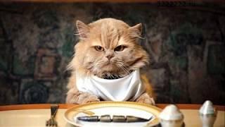 Почему коты едят что попало