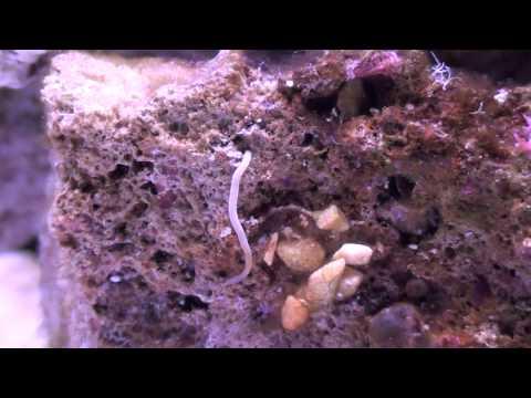 Találtak pinworms