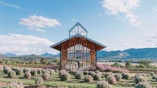 Kooroomba Lavender Farm Wedding | Mt Alford, Queensland