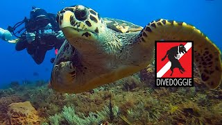 Extraordinary Underwater Amputees