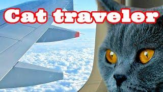Как перевести кошку из России в Европу. How to transfer a cat from Russia to Europe.