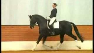 Redwine black Hanoverian stallion dressage in germany