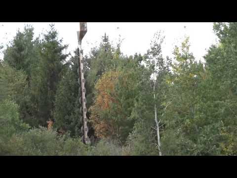 Công nghệ cắt tỉa cây ở nước ngoài