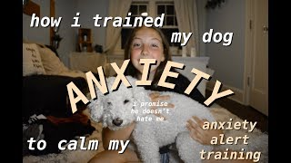 how i trained my DOG to calm my ANXIETY!!! anxiety alert training + step by step