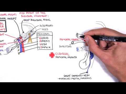 Was analysiert Erkrankungen der Gelenke zu über bestimmen