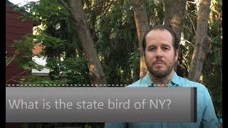 What is the state bird of New York?