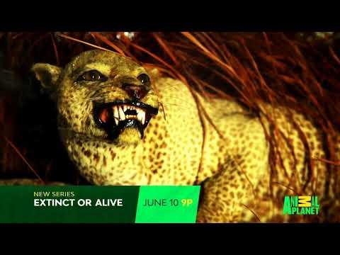 Video trailer för Extinct or Alive (2018)