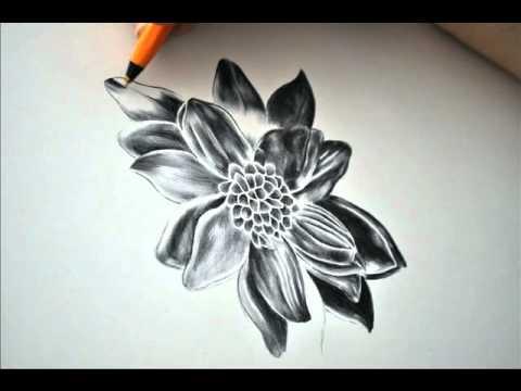 black dahlia by paul alexander thornton