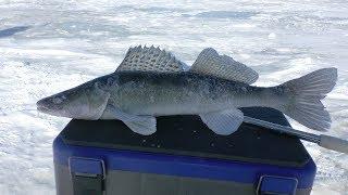Рыбалка зимняя на средней волге