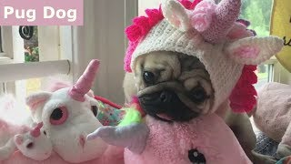 Funniest and Cutest Pug Dog Video Compilation #9 - The Cutest Pug Ever