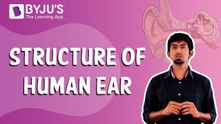CH06-SENSORY SYSTEMS-PART05-THE EAR01