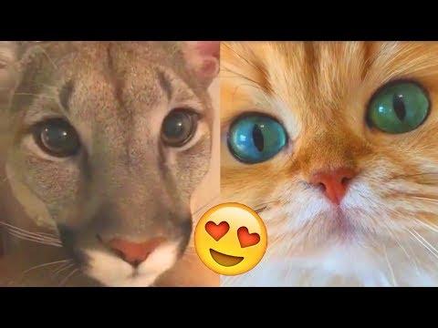, title : 'Я РЖАЛ ПОЛ ЧАСА | Смешные Коты и Собаки | ПРИКОЛЫ С ЖИВОТНЫМИ | Cute Cats'