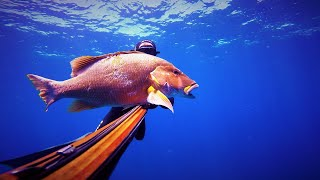 Spearfishing Guadeloupe Désirade Vol 5
