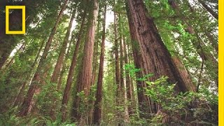 Experience the Magic of Redwood National Park | Short Film Showcase