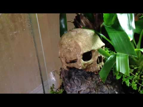 Poison dart frog vivarium update (added plant + pond/waterfall)