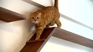 Cat House | I Love This | HGTV Asia