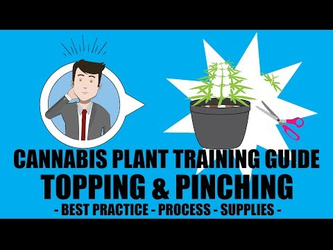 Marijuana Training Techniques