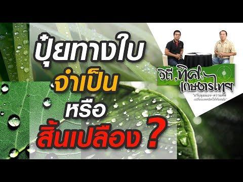 วิถีทิศเกษตรไทย ตอน ปุ๋ยทางใบ จำเป็น หรือ สิ้นเปลือง ?