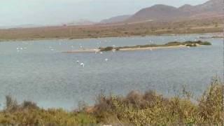 Flamingos - Cabo de Gata, Almeria