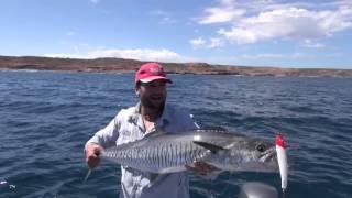 How to catch spanish (king) mackerel, The average angler fishing adventures