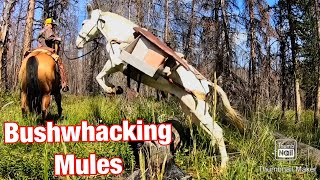 Mules Go Bushwhacking: Vlog #6