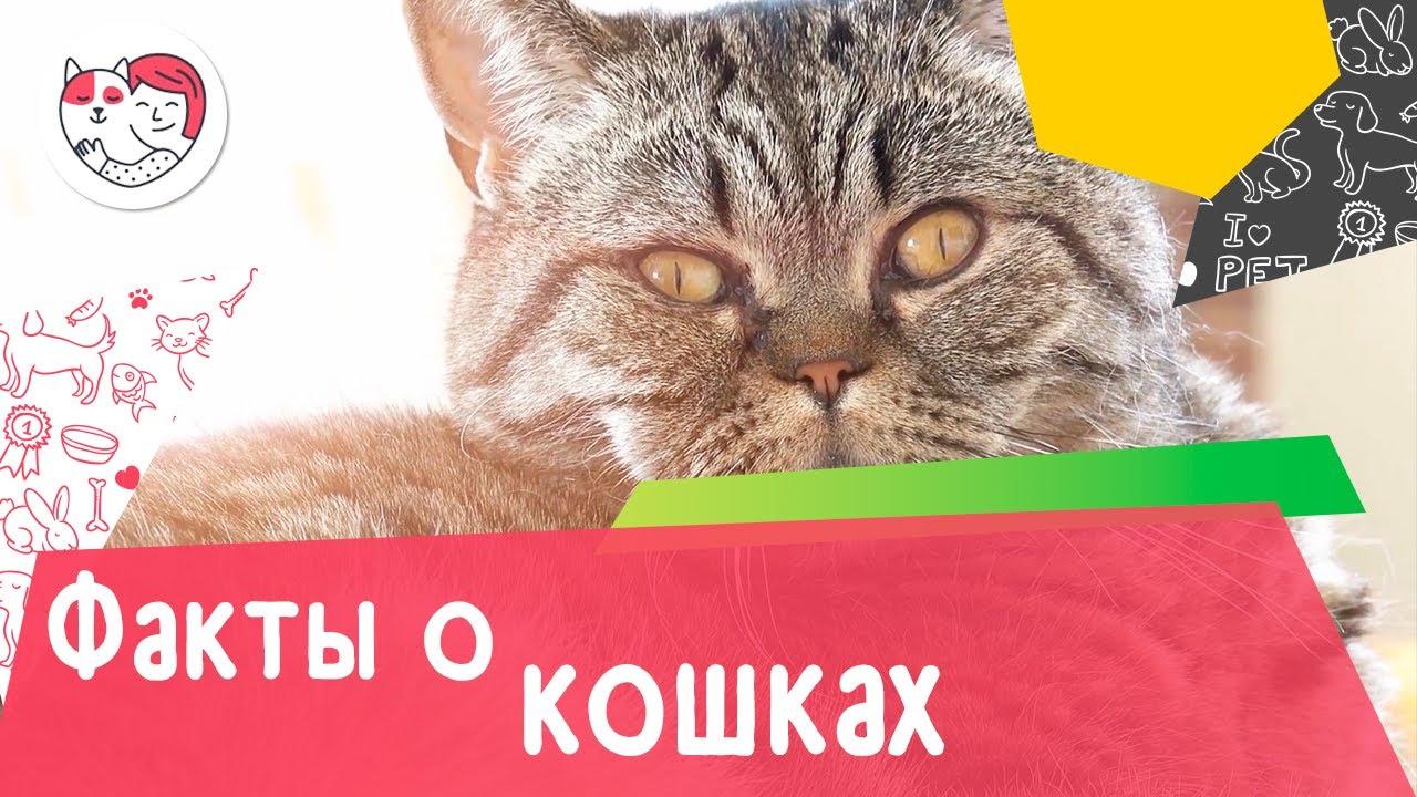 5 малоизвестных фактов о кошках