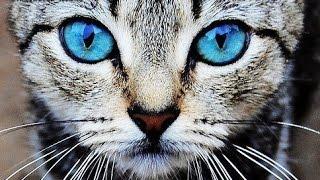 Говорящий кот, кот ест пылесос, обнимашки с котом!