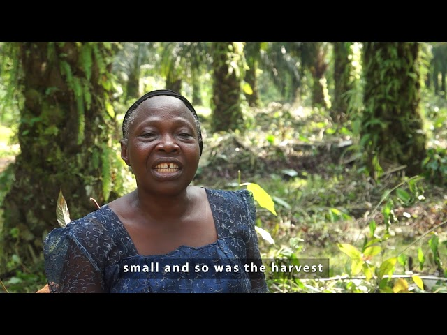Oil Palm Best Managment Practice Testimonial Video