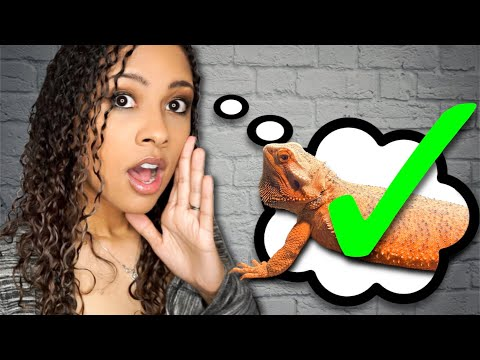 Why You SHOULD Get A Bearded Dragon
