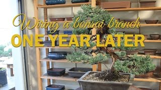 How to Wire a Bonsai Branch. One Year Later