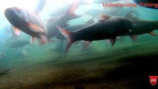 পানির নিচে মাছের রহস্যময় জগত।। Most Amazing Beautiful Under Water Fish।। Under Water Fish
