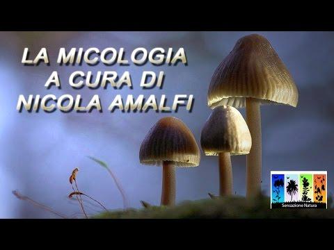 Se gambe a causa di un odore di fungo