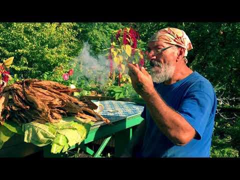 Как вырастить  табак на огороде?