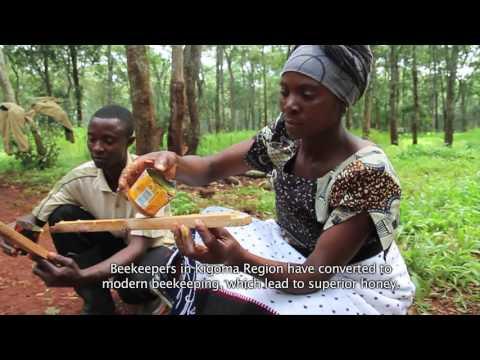 Beekeeping films on Youtube
