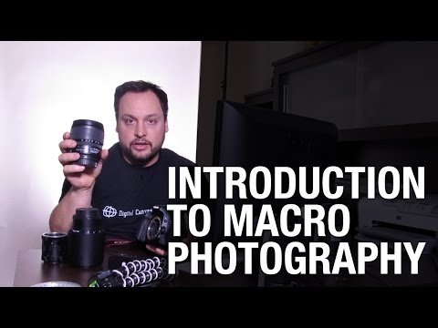 Beginners Guide to Macro Photography: Equipment, Setup, Tricks and Tips