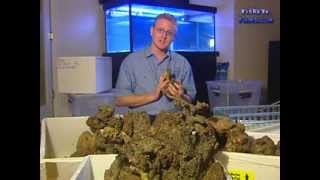 Everything about LIVEROCK for a Reef Aquarium