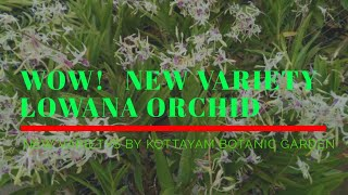 Wow !!! New Variety Lowana Orchid