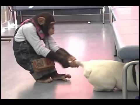 Hành trình khỉ và chó : Khám sức khỏe