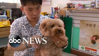 Cuteness Cubed! Dogs With Square Haircuts Go Viral
