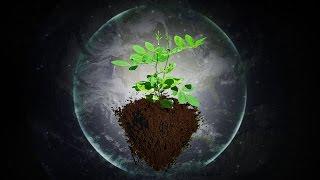 Music For Plants   Music Stimulation For PLANT HEALTH   Brainwave Entrainment