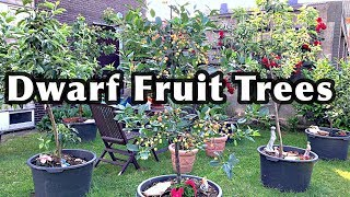 DWARF FRUIT TREES In Containers