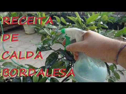 Como livrar-se de um fungo de pregos que estão por meio de um limão