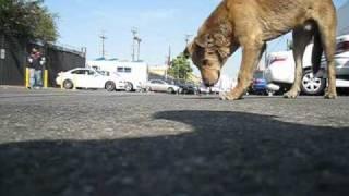 Dog rescue: Goldie and Romeo (Part 2 of 2) - (By Audrey & Eldad Hagar)