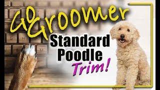 Complete Standard Poodle Trim