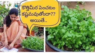 How to grow coriander at home successfully?కొత్తిమీరను సులువుగా పెంచడం ఎలా?#corriander #tips
