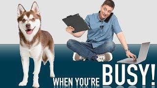 How to Raise a Dog When You're Busy