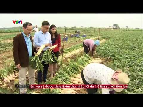 Biggreen cùng Sở Công Thương Hà Nội và bộ NN&PTNT đã bàn phương án giải cứu hàng nghìn tấn củ cải ứ đọng cho người dân thuộc huyện Mê Linh
