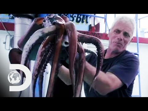 Fishing For Deadly Humboldt Squid Off The Coast Of Peru   River Monsters