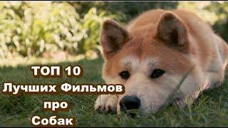 ТОП 10 Лучших Фильмов про Собак